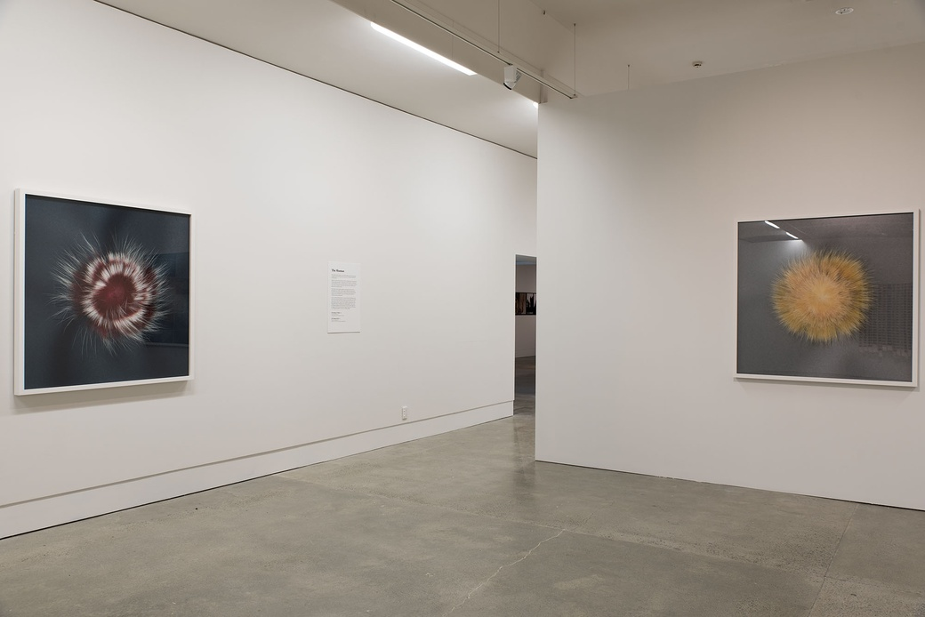 Installation view of 'The Shaman (Red)' and 'The Shaman (yellow', both 2006, in Gavin Hipkins: The Domain. Photographer John Lake.