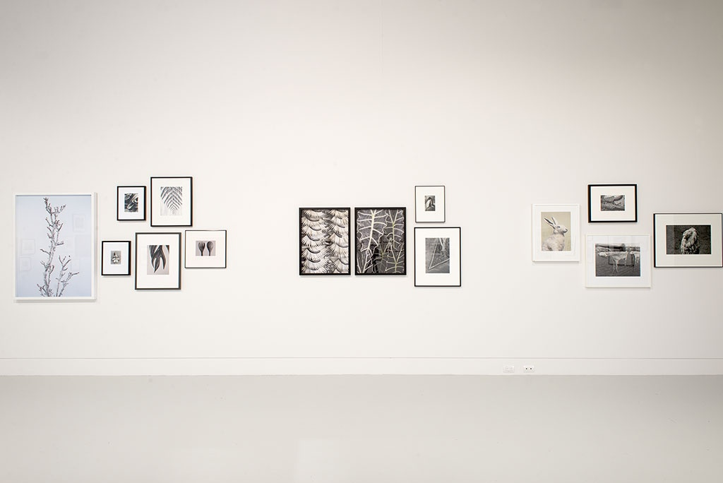 Peter Peryer: A Careful Eye, installation view, 2014. Photo: John Lake