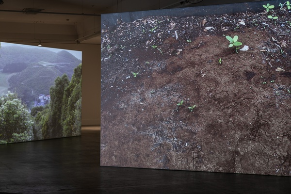 Xin Cheng and Adam Ben-Dror, Making like a Forest 2020 (install view) at The Dowse. Photo by Ted Whitaker.